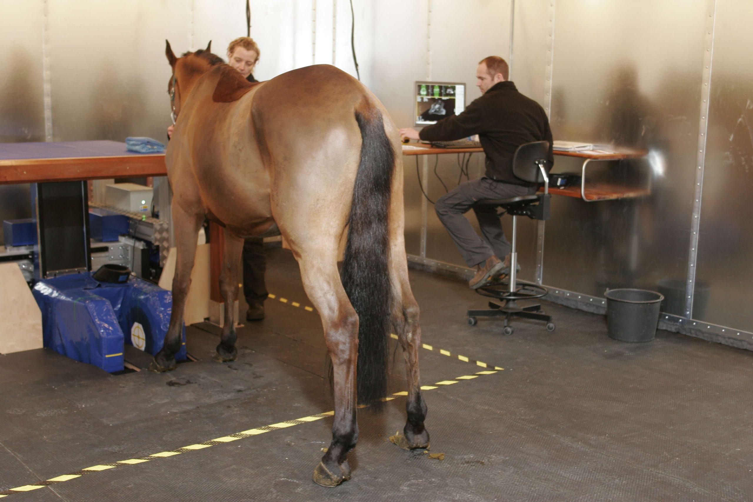 Vestjysk hestehospital med i VETgruppen